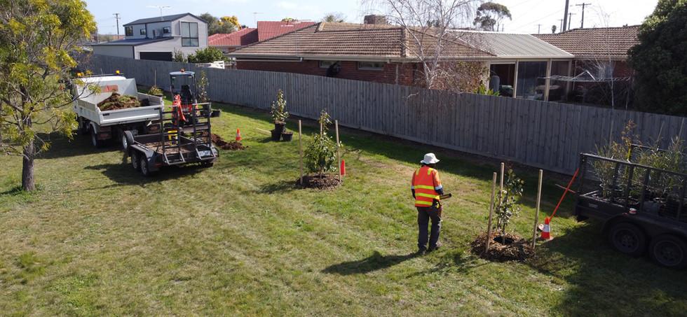 Tree Planting and Establishment