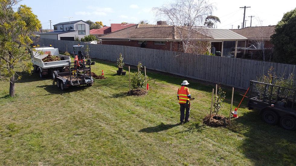 Wyndham Tree Planting and Establishment
