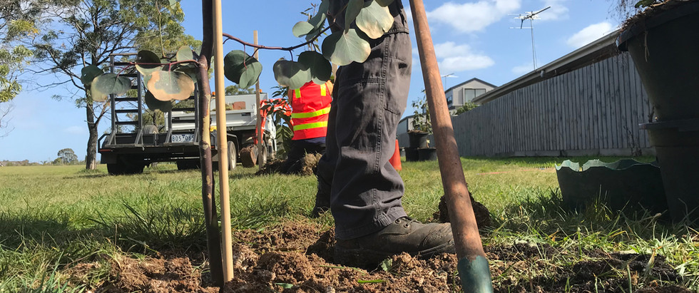 Wyndham Plantings 2020