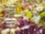 Fine art prints by Donika Nikova - ShaynART. Digital art. Photo manipulation. Art services. Free wallpaper.