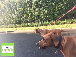 HomeSIT Dogwalking Excursions