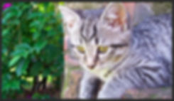 housesitting company Cape Town, housesitter Cape Town