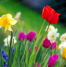 springtime.jpg