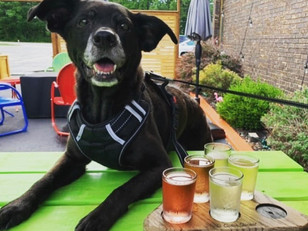 Bring The Pooch To These Pet-Friendly Venues In Berrien County