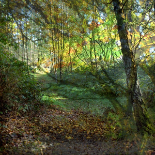 Whisby Nature Park  Composite 1