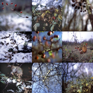 Whisby Nature Park  Winter