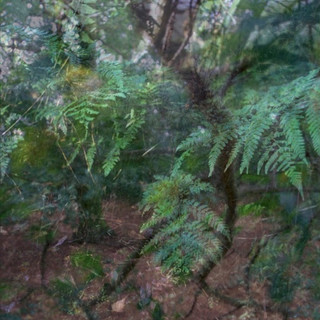 Whisby Nature Park  Composite 2