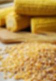 巴西玉米 Brazil Maize