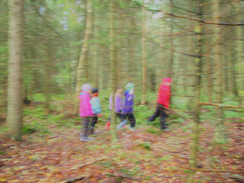 kids in the forest.jpg