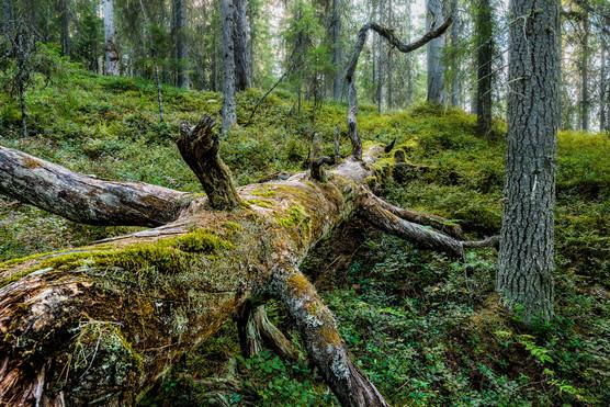 Seitseminen-Nevereding.Forest_eciR.sOe.j
