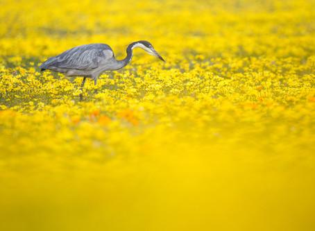 Photo Story - Flower Season