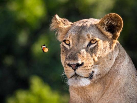 Photo Story - Best of Botswana