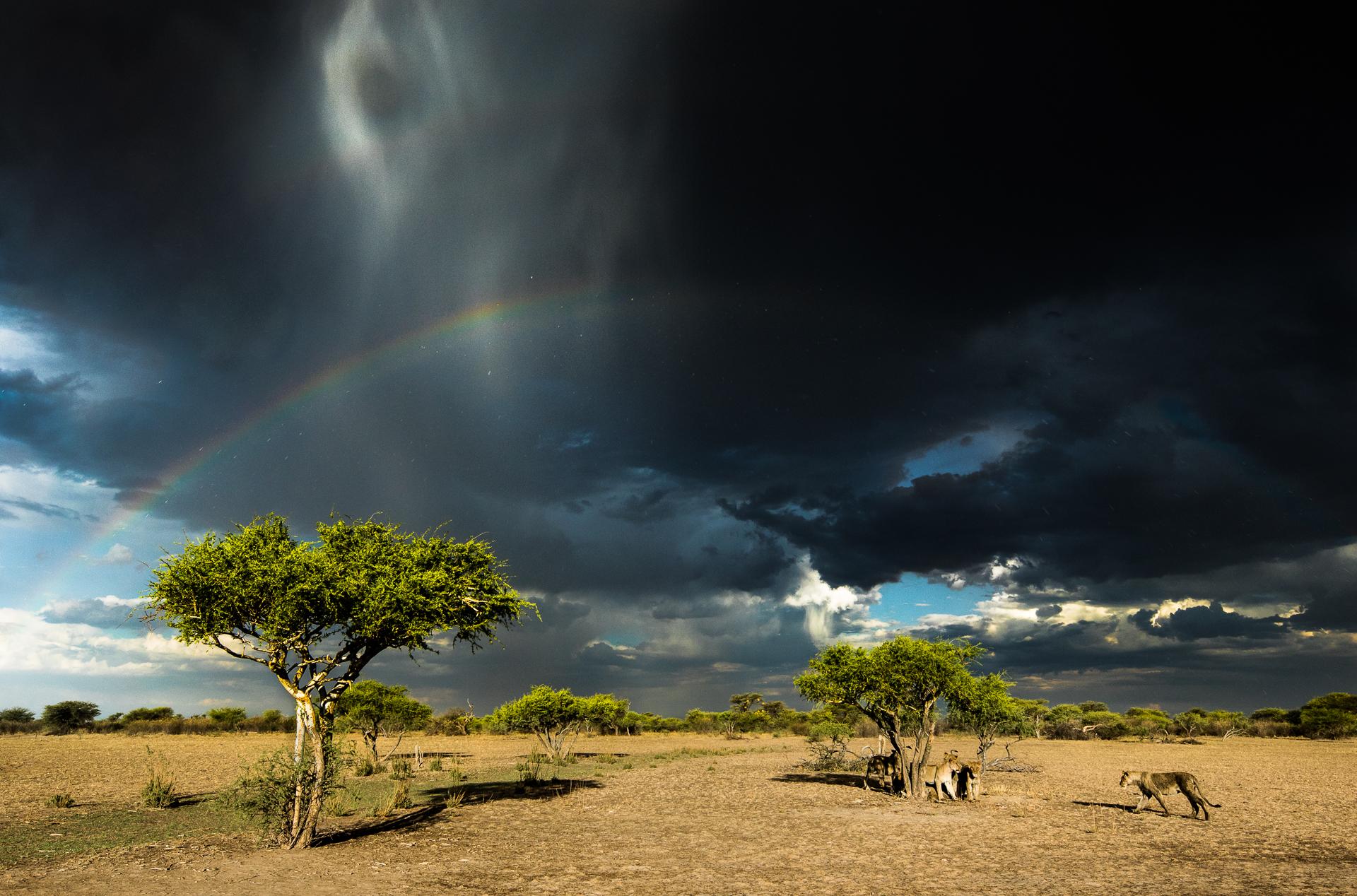 Storm cats