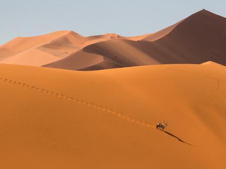 Photo Story - Desert Nomads