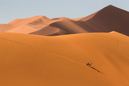William steel photography. namibia, oryx.