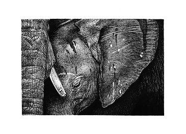 Elephant (big).JPG