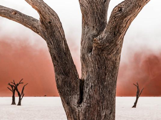 Photo story - Namibia: A desert Eden