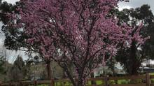 Spring in Berwick
