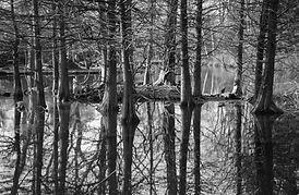 Árvores reflexo na água