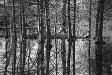 Bomen weerspiegeling in het water
