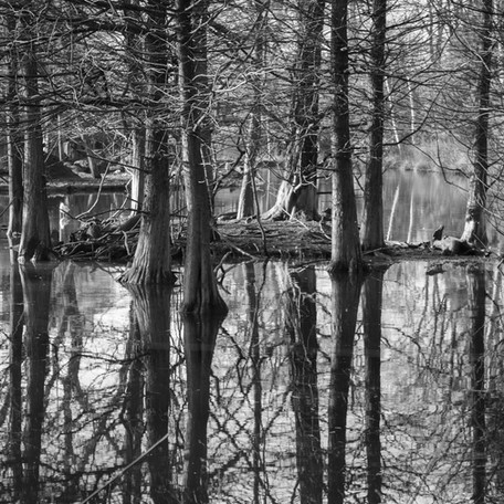 Trees Reflection in the Water
