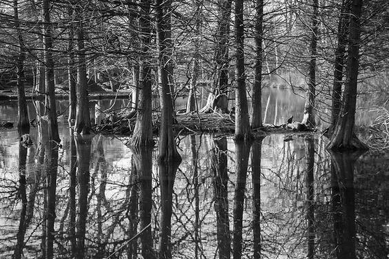 Photo d'une lagune avec de grands arbres poussant dans l'eau.
