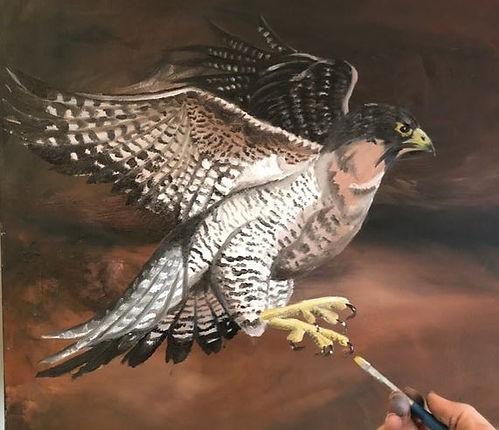 falcon .jpeg