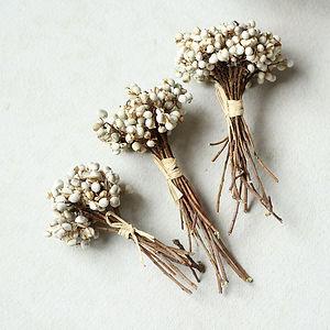 Flores Secas.jpg