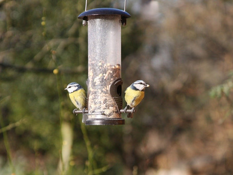 Bird is the Word: Love and Enjoy  Birdwatching This Spring
