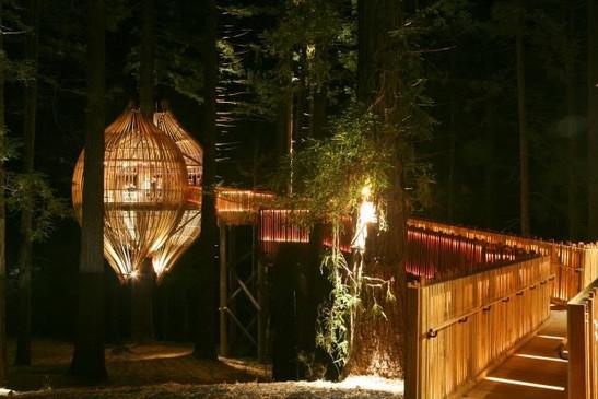 Restaurant dans les arbres - Nouvelle Zélande