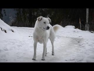 Kasol Travel Video Trailer