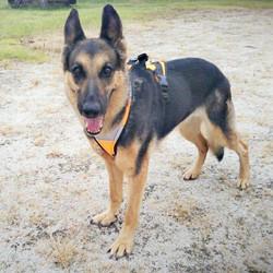 Police an SAR Dog Lien. End of watch 15.