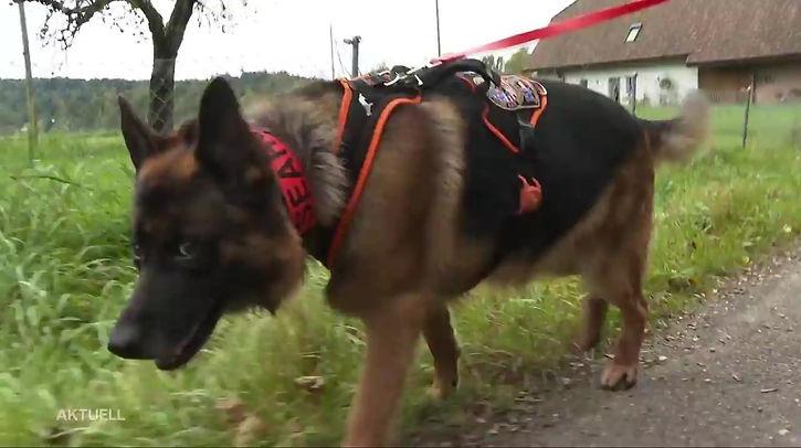 Einsatz der Rettungshundestaffel