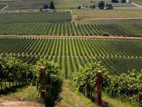 Sistemas de condução de plantio da uva valorizam negócios e criam paisagens consideradas patrimônios