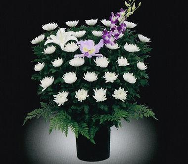 供花 和菊15,000-1.jpg