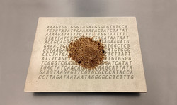 aserrín sobre su código de ADN