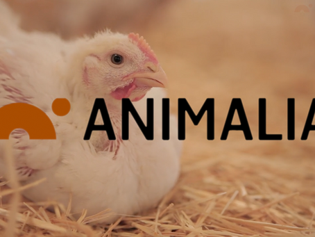 Ny informasjonsfilm for Animalia