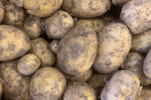Frühkartoffeln Agata ungew.