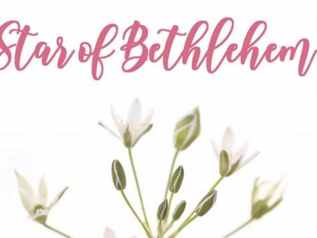 La fleur de Bach câlin