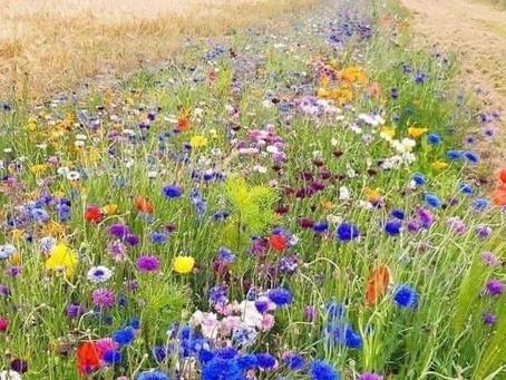 Elixir floral : contre les ruminations mentales