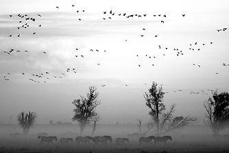 Krajobraz ze zwierzętami