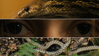 """Serpent"" - Them That Follow"
