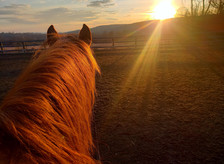 RELATIONSHIP-BASED HORSEMANSHIP
