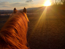 RELATIONSHIP-BASED HORSEMANSHIP