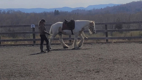 BUILDING LANGUAGE WITH HORSES THROUGH BINARY CODE