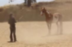 Mundano_Spanish_Wilbur_Cruce-Horse_Heath