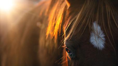 THE HORSES, MY TEACHERS