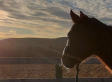 THE HEALING POWER OF HORSEMANSHIP