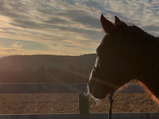 THE HEALING POWER OF HORSEMANSHIP