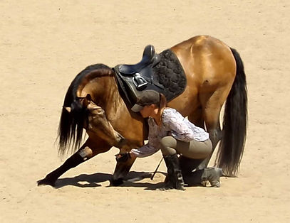 Diamoro_Colonial Spanish Mission Horse S